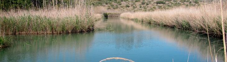 Ruta eco-aquática en Pego