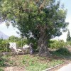 Ruta de los árboles singulares