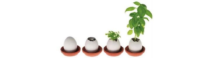 Plantas en Huevo-Eggling